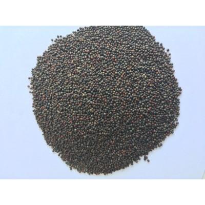 Семена за покълване броколи 50гр.